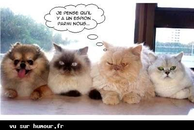 blague animaux  Thp446t8